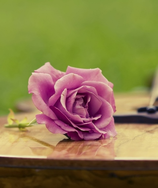 Beautiful Rose Picture for Nokia C1-01
