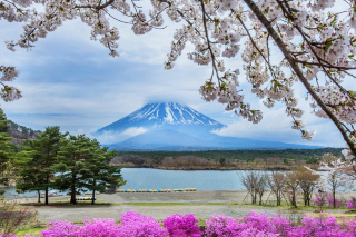 Spring in Japan Background for Android, iPhone and iPad