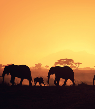 African Silhouettes Background for HTC Titan