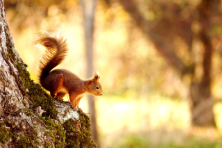 Squirrel Background for Widescreen Desktop PC 1920x1080 Full HD