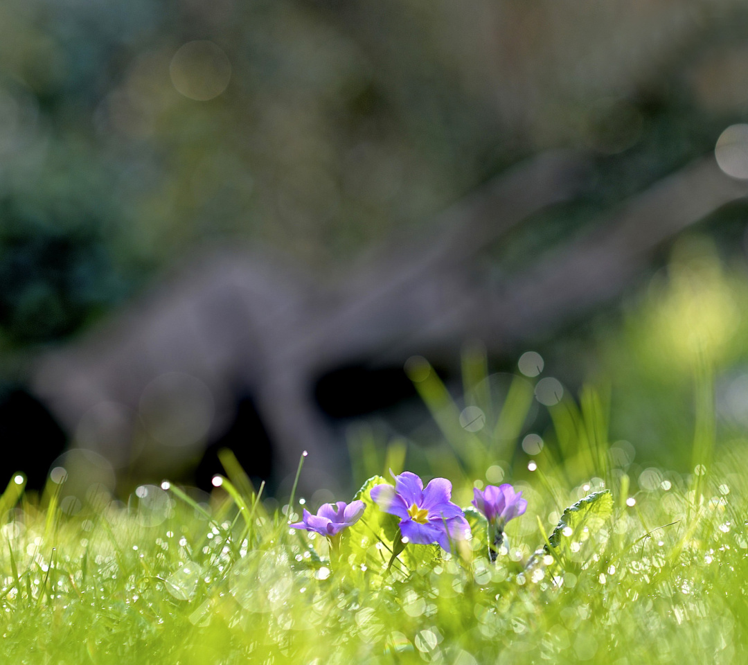 Screenshot №1 pro téma Grass and lilac flower 1080x960