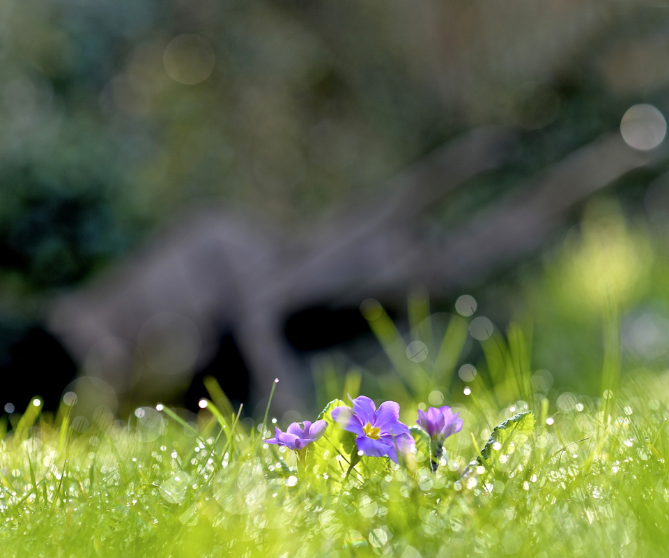 Screenshot №1 pro téma Grass and lilac flower 960x800