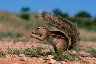 Chipmunk HQ Background for Android, iPhone and iPad