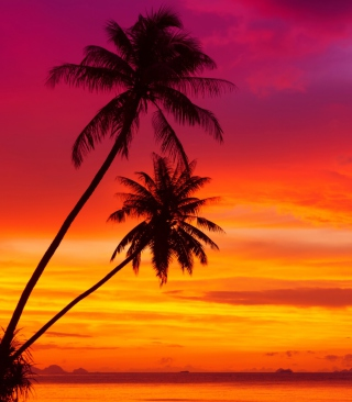 Amazing Pink And Orange Tropical Sunset sfondi gratuiti per Nokia Lumia 925