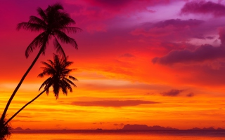 Amazing Pink And Orange Tropical Sunset Picture for Android, iPhone and iPad