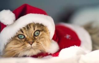 Cute Christmas Cat Wallpaper for Android, iPhone and iPad