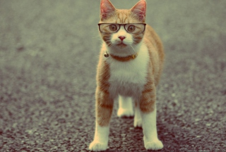 Funny Cat Wearing Glasses Wallpaper for Android, iPhone and iPad