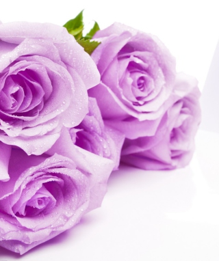 Free Purple Roses Picture for Nokia C2-05