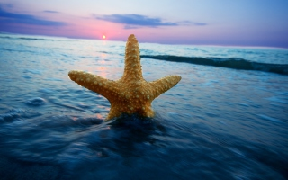 Kostenloses Happy Sea Star At Sunset Wallpaper für Android, iPhone und iPad