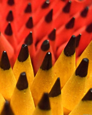 Colored Pencil Set Wallpaper for Nokia Lumia 1020