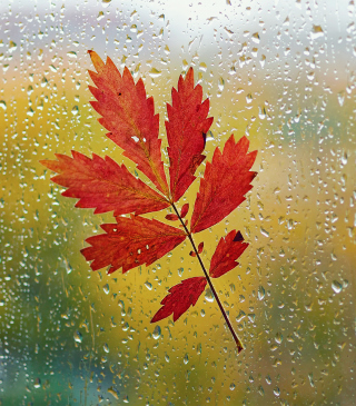 Red Autumn Leaf Wallpaper for iPhone 6 Plus
