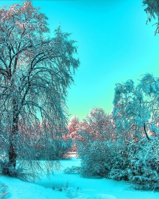 Last Month of Winter Wallpaper for Nokia Asha 306