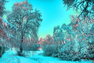 Free Last Month of Winter Picture for Desktop Netbook 1366x768 HD