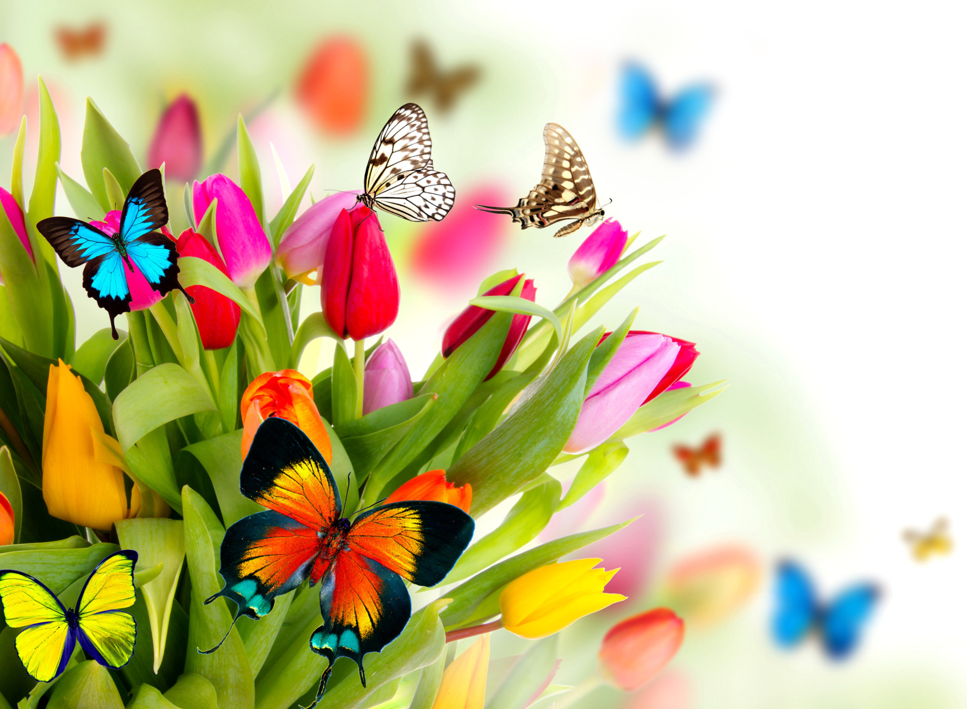 Screenshot №1 pro téma Tulips and Butterflies 1920x1408