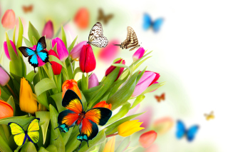 Tulips and Butterflies Background for Android, iPhone and iPad