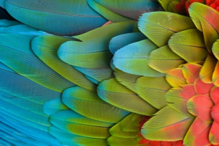 Parrot Pattern Picture for HTC Wildfire