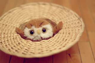 Cute Toy Owl Wallpaper for Android, iPhone and iPad