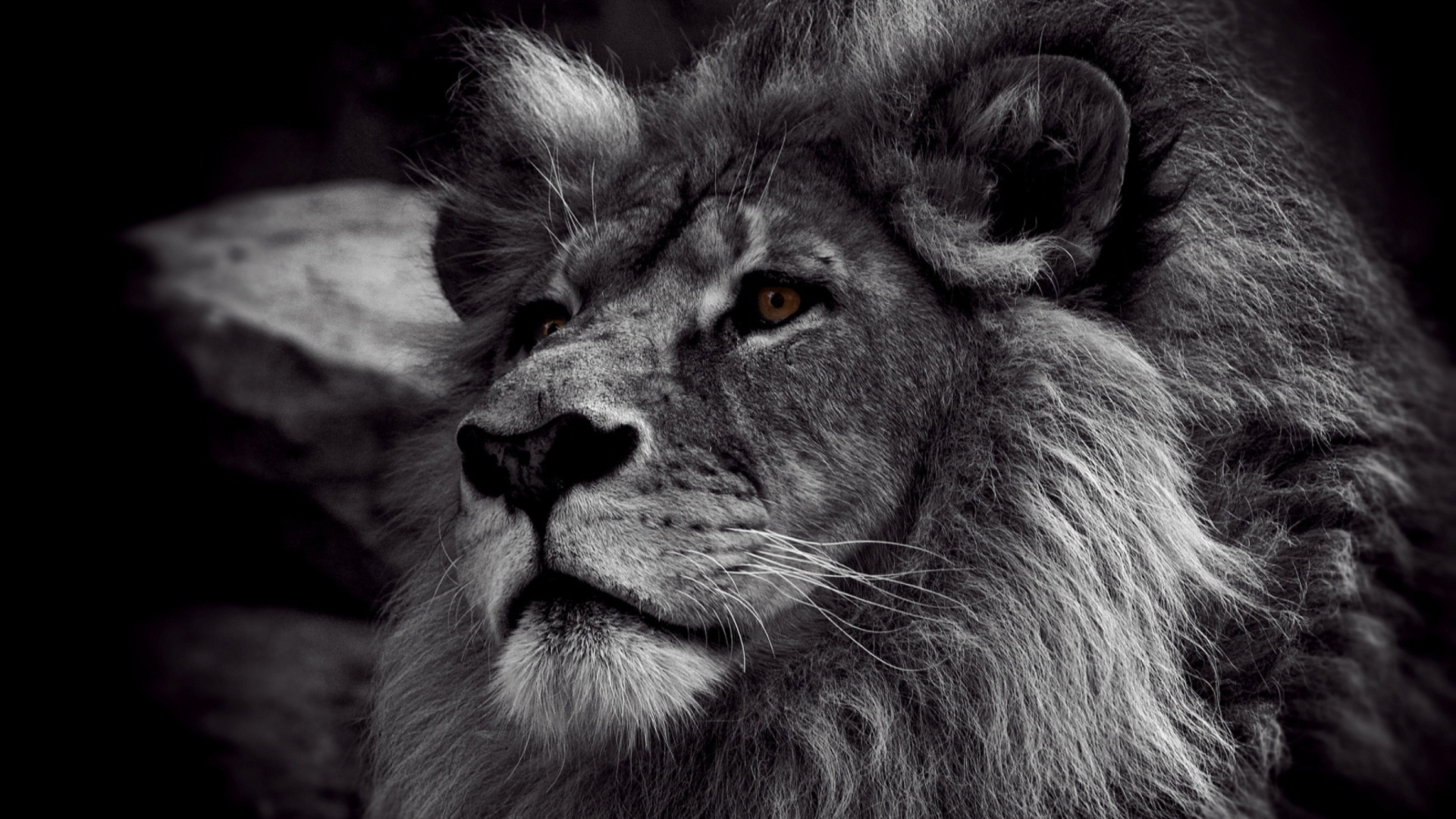 Screenshot №1 pro téma Black And White Lion 1920x1080