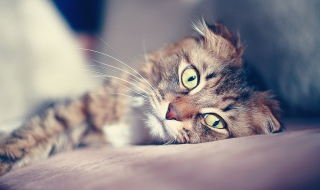 Cute Cat Wallpaper for Android, iPhone and iPad