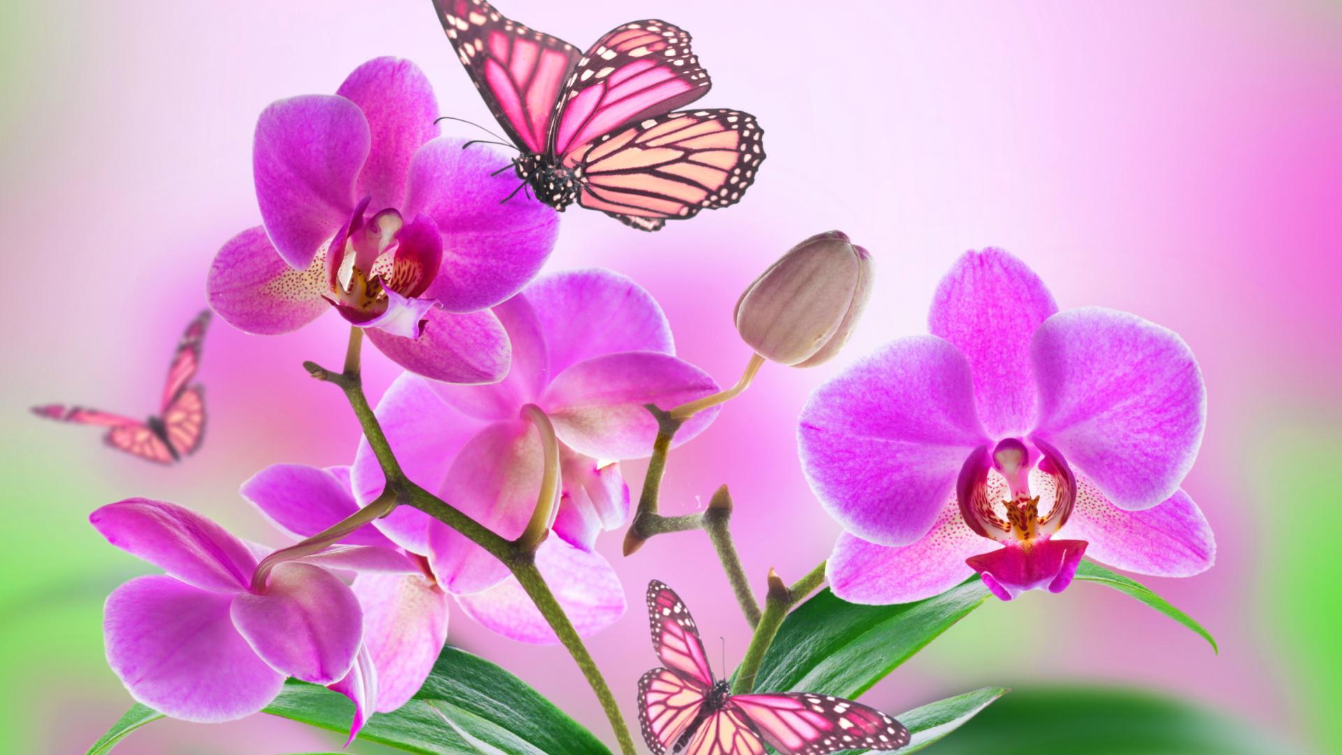 картинки с орхидеями на рабочий детей подготовила специально