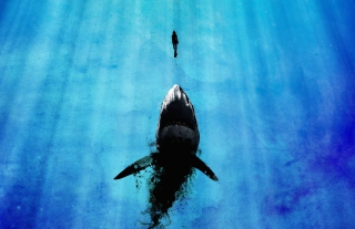 Kostenloses Shark And Swimmer Wallpaper für Android, iPhone und iPad