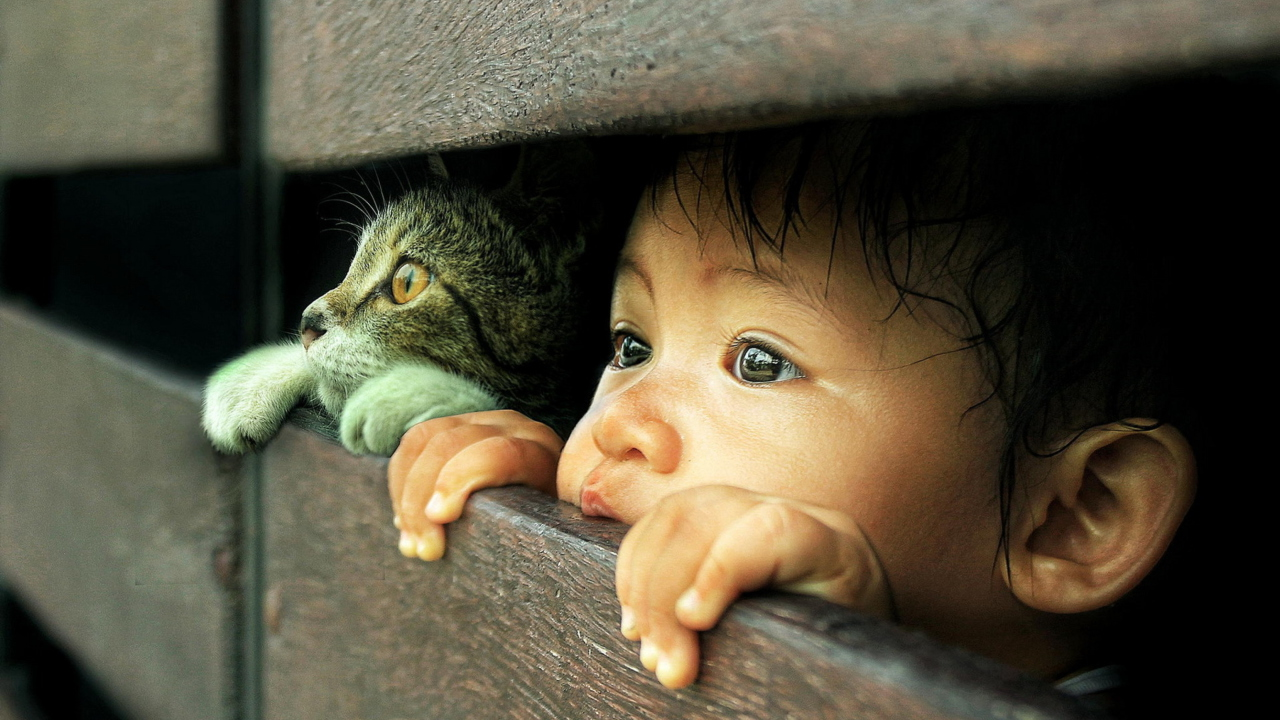 Baby Boy And His Friend Little Kitten
