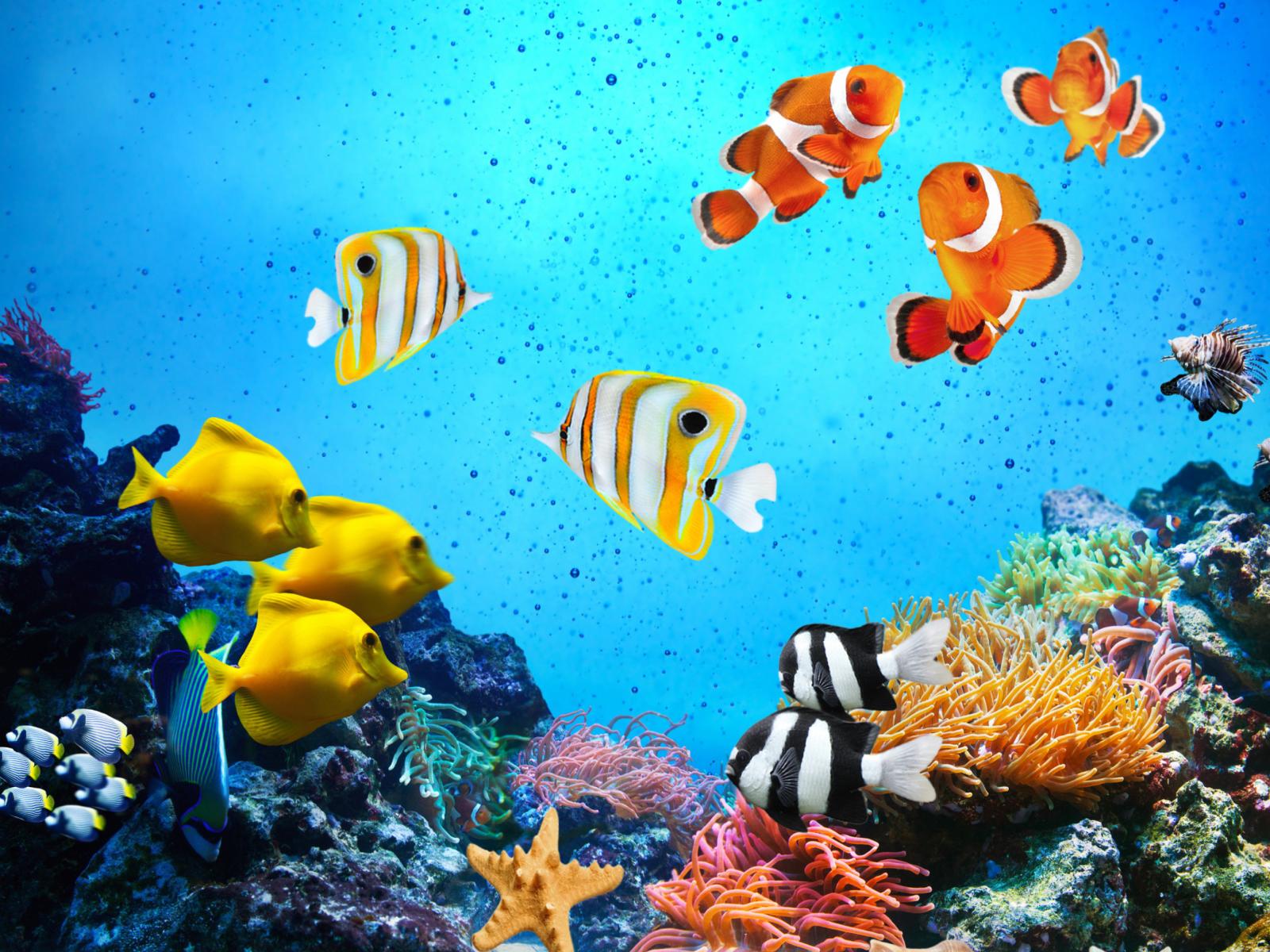 картинка на компьютер рыбки поделиться еще