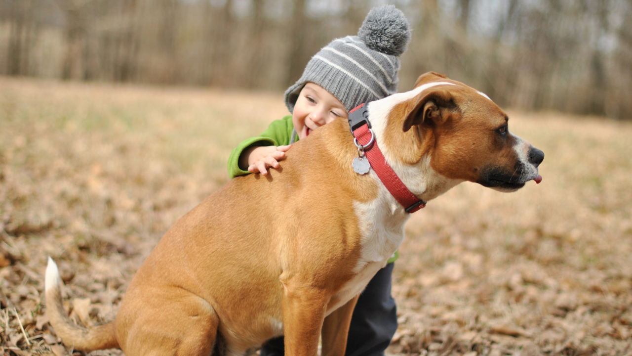 Child With His Dog Friend