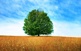 Tree In Field sfondi gratuiti per cellulari Android, iPhone, iPad e desktop