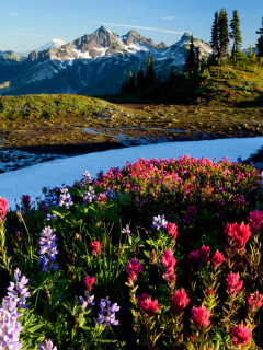 Screenshot №1 pro téma Mountain Flowers 240x320