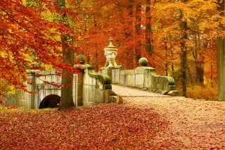 Autumn in Peterhof Picture for Android, iPhone and iPad