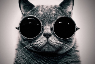 Cat With Glasses - Fondos de pantalla gratis para HTC EVO 4G