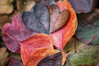 I Love Autumn Background for Android, iPhone and iPad
