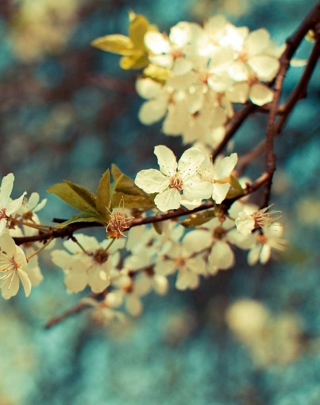 Beautiful Spring Background for Nokia C1-01