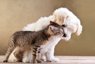 Free Life Of Cat And Dog Picture for Android, iPhone and iPad