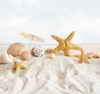 Free Seashells On The Beach Picture for 1024x1024