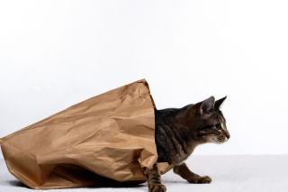 Обои Cat In Paperbag для телефона и на рабочий стол