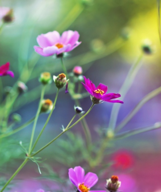 Amazing Pink Flowers Background for HTC Titan