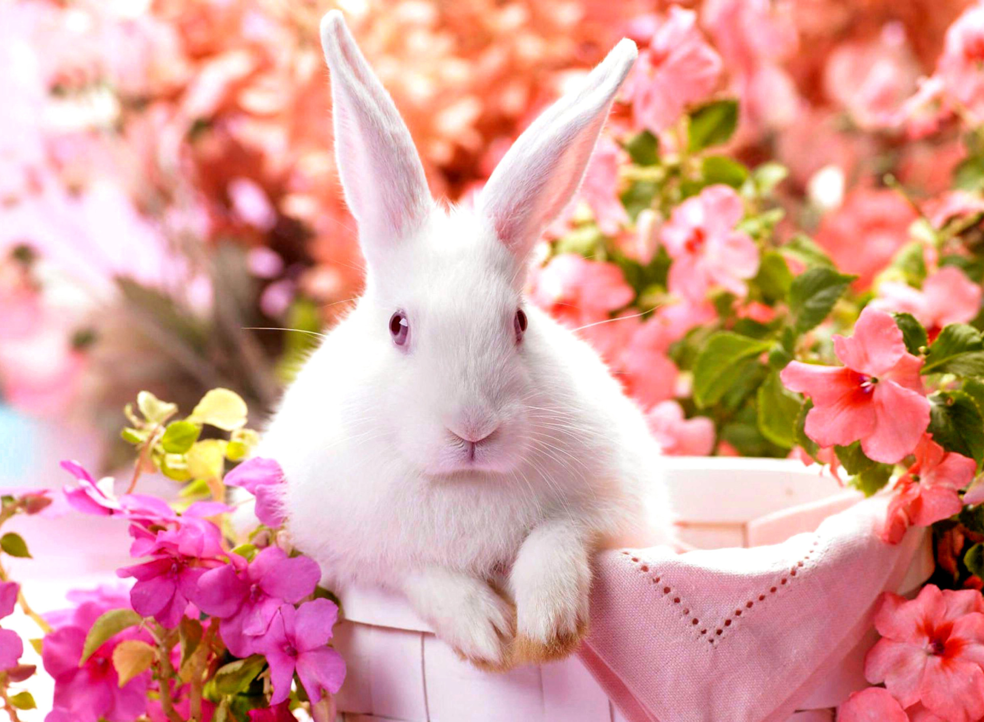 Открытки, открытка белые кролики
