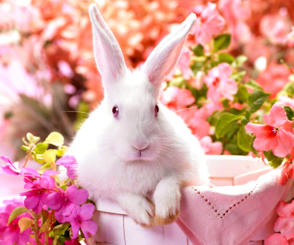 Cute Rabbit wallpaper 960x800