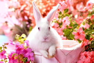 Cute Rabbit Wallpaper for Android, iPhone and iPad