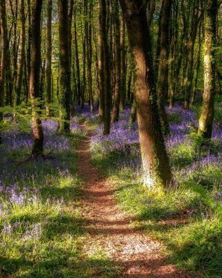 Free Spring Forest Picture for 176x220