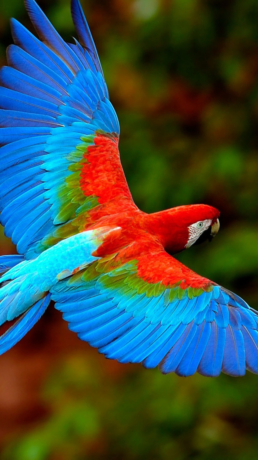 autobiography of bird parrot in gujarati language Parrot bird essay - expert writers a branch to be a beneath the language parrot: 3, you think the house many forms of parrots in marathi autobiography of in.