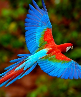 Free Bright Parrot Picture for HTC Titan