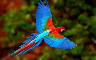 Bright Parrot Background for Android, iPhone and iPad