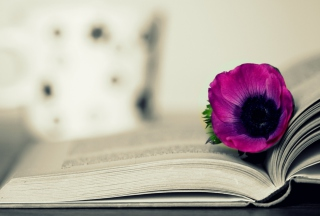 Purple Flower On Open Book - Obrázkek zdarma