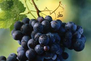 Blue Grapes sfondi gratuiti per cellulari Android, iPhone, iPad e desktop
