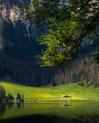Bavarian Alps and Forest Picture for 240x320