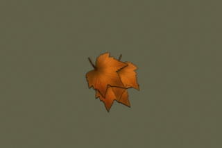 Autumn Wallpaper Background for Android, iPhone and iPad