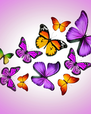 Orange And Purple Butterflies Picture for 360x640